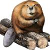 tester_beaver